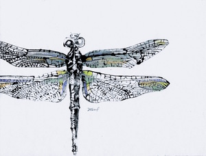 Dragonfly Monotype