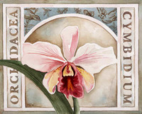 Orchid Exotica I
